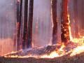 Защитим лес от огня