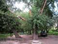 Депутаты составят список ветхоаварийных деревьев