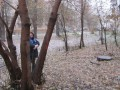 Маркировка аварийных деревьев