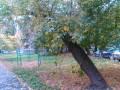 Снос аварийных и сухих деревьев