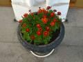 Городской конкурс цветочных клумб