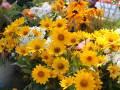 Конкурс клумб «Калининский цветущий»